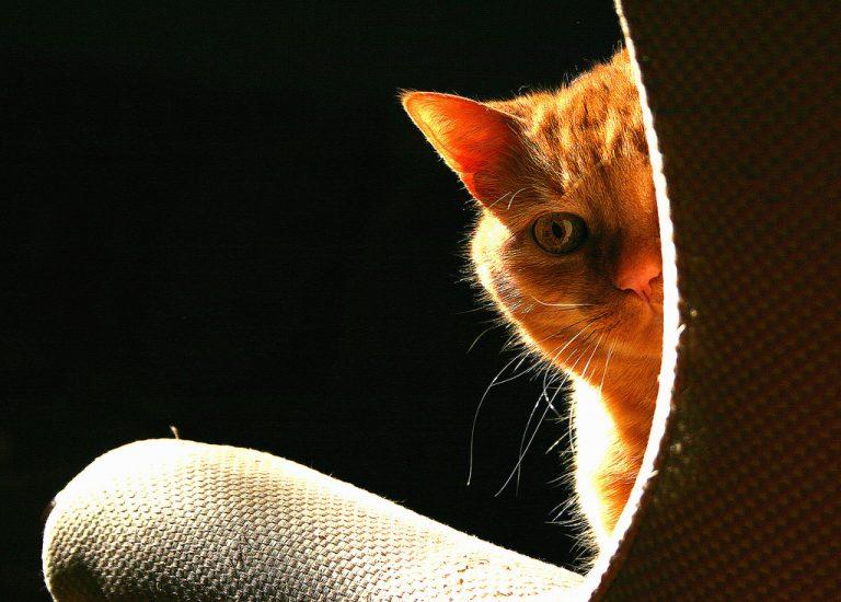 причины плохогозапаха кота
