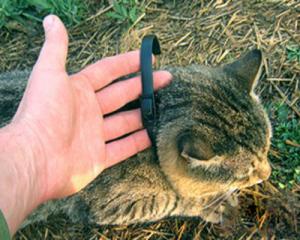 рекомендации по носке ошейника от блох для кошки