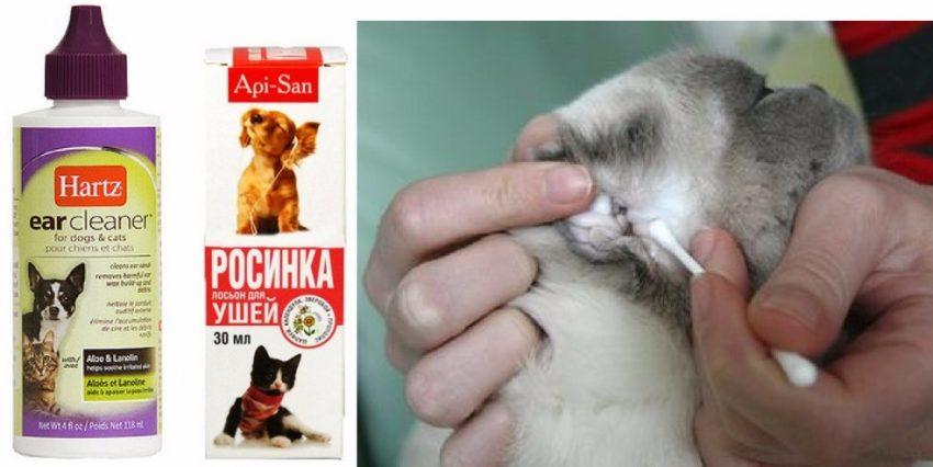 Чистка ушей у кошек в домашних условиях