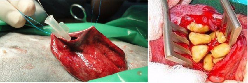 хирургическое лечение мочекаменной болезни у кота