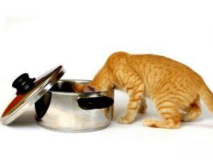 камни в почках у кота что делать