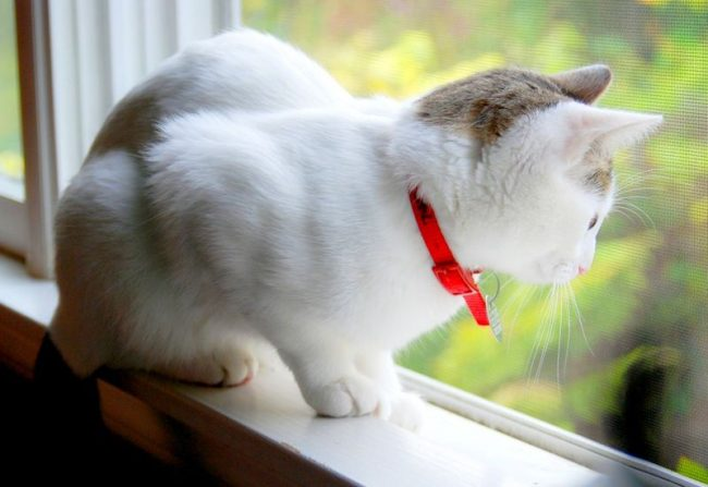 методы профилактики блох у кошек