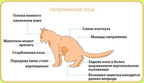 Как лечить мочекаменную болезнь котов: мбк - что это, как проявляется, что делать, если камни в почках, чем лечить, что колоть, как понять, что не отходит моча