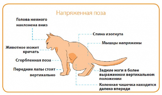 почему пахнет изо рта у кошек