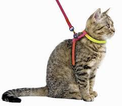 правила одевания шлейки для кота