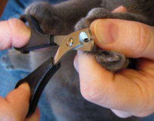 правила стрижки когтей кошке