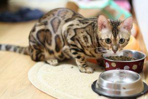 питание котенка