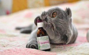 почему нельзя кошке давать валериану