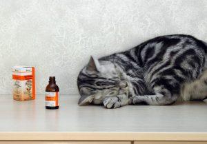 почему кошка любит валерианку