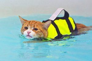 как приучить кота купаться