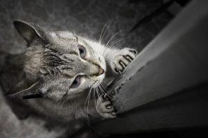 почему нужно стричь когти кошки