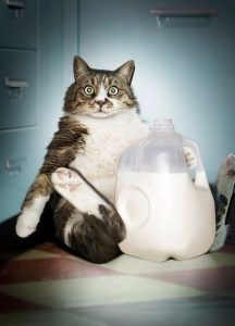причины рвоты у кошки
