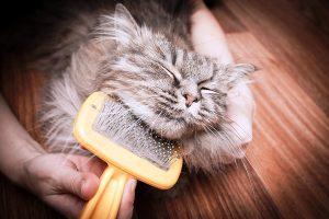 как правильно вымыть кота