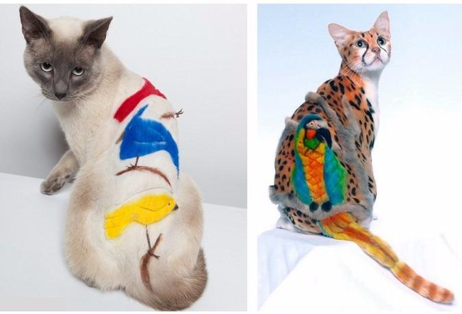 выставочные стрижки кошек