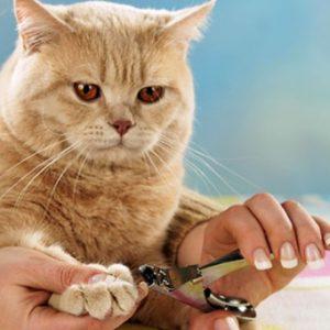 правила стрижки когтей коту