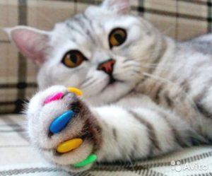 как правильно наклеить антицарапки кошке