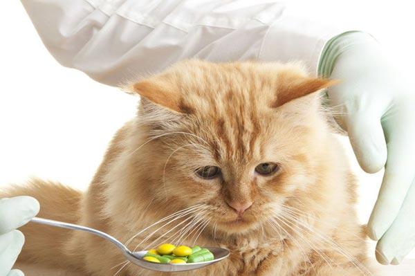 методы как дать кошке таблетку