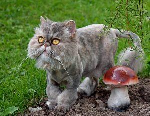 как красиво подстричь кота