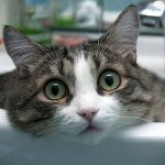 как приучить кота к ванной