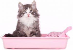 правила приучения кошки к лотку