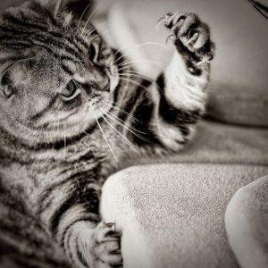что делать, чтобы кот не портил мебель