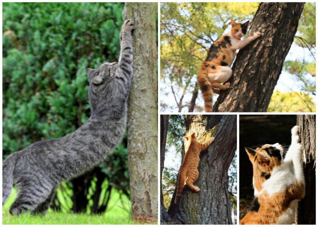 что делать, чтобы кот не точил когти об дерево