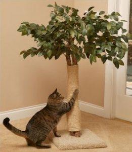 когтеточка для кота