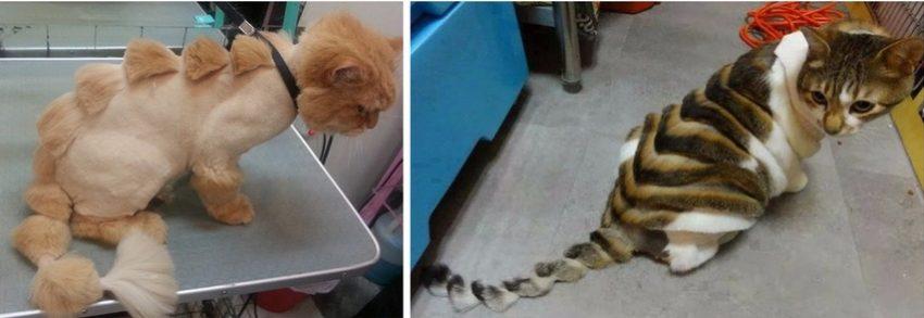 салонные стрижки котов