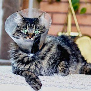 приспособления для стрижки котов