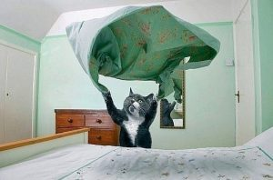 Почему кошка гадит на постель, что делать хозяину, как отучить питомца гадить на постель