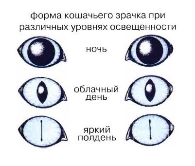 изменение зрачка в зависимости от освещения