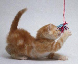 как видят предметы кошки