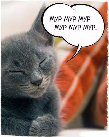 причины мурлыканий кошки