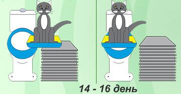 как причить кота к унитазу