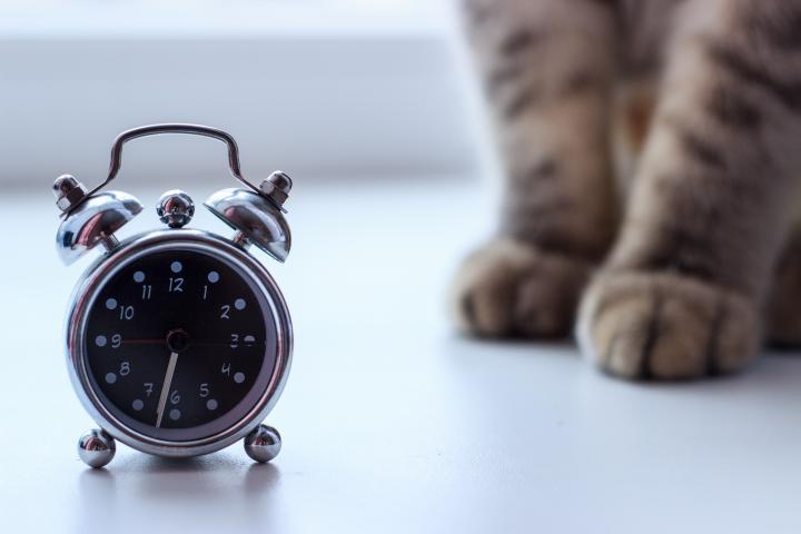 правила кормления котов
