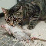 причины, почему кошка принесет добычу домой