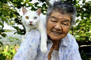 возраст кошки и человека