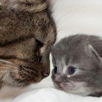 определить возраст кота