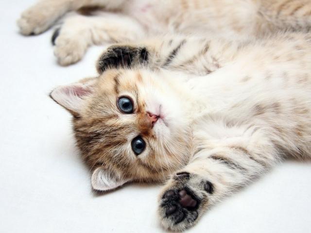 Удачный кадр кота для объявления