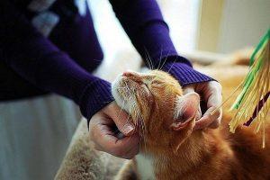 что делать, если кошка принесла мертвое животное домой