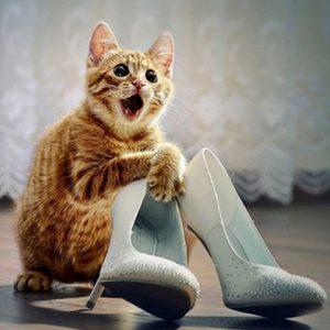 причины такого поведения кота