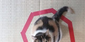 что нужно сделать, чтобы споймать кота