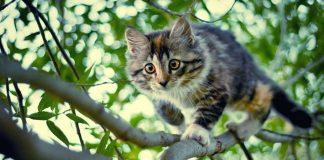основные методы снятия кота с дерева