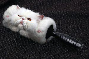 что делать при сильной линьке кошки