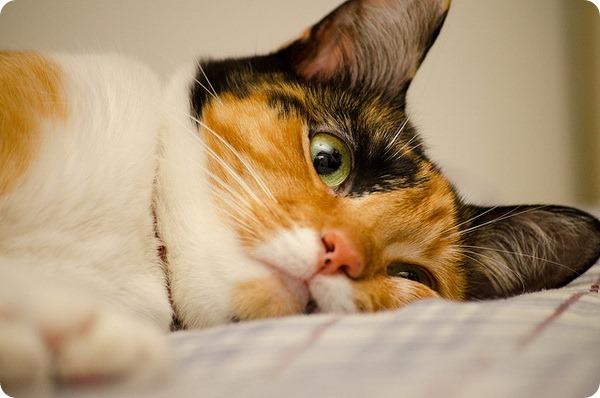 как помочь кошке после отравления