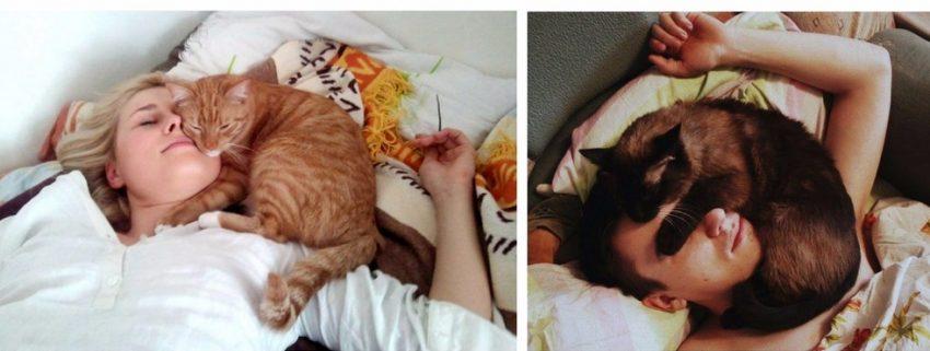 почему коты спят с человеком