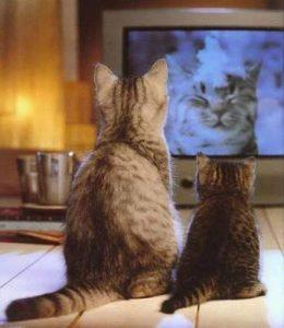 какие цвета различают кошки