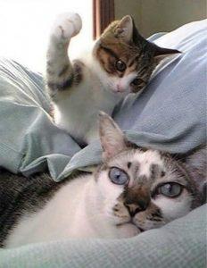 почему кот метит территорию