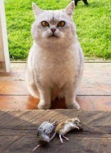 добыча кота
