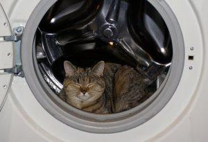 любимые места для сна у кошек